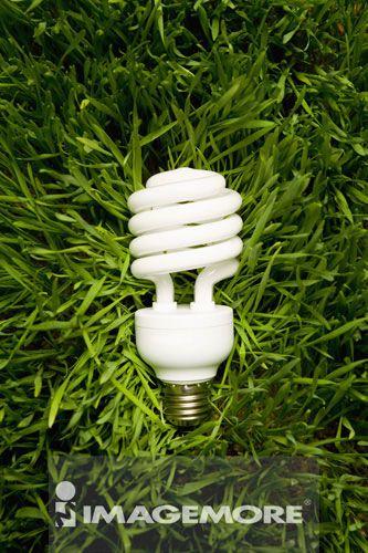 草,电灯泡