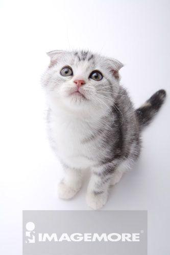 壁纸 动物 猫 猫咪 小猫 桌面 333_500 竖版 竖屏 手机