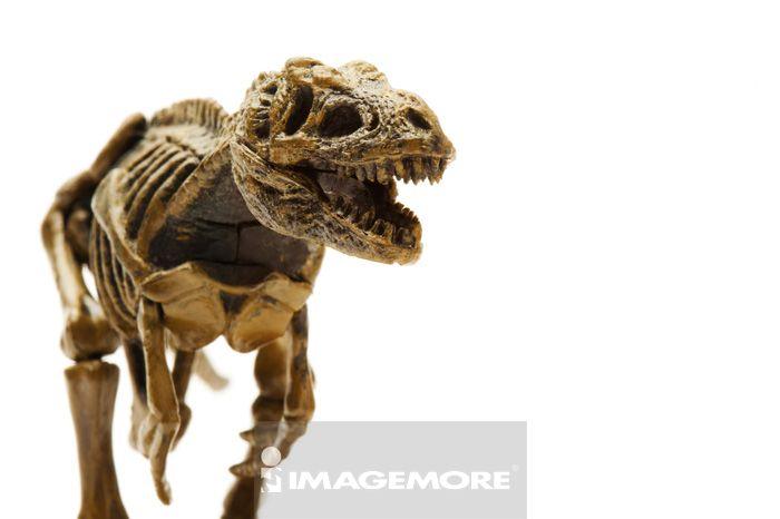恐龙,动物骨骼