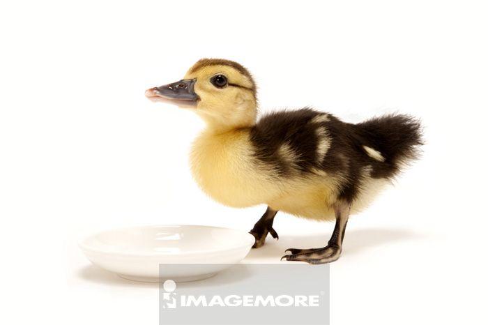 柔软,动物主题,新生命,脆弱,开始,一只动物,动物行为,饲养动物,碟子