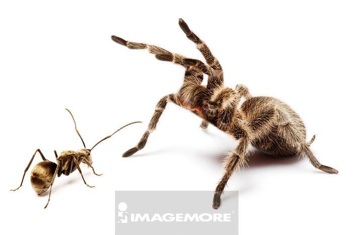 蚂蚁,蜘蛛,