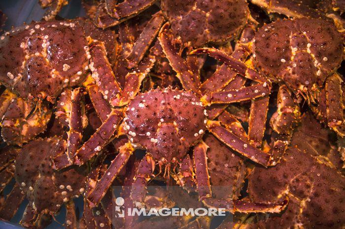 食物,帝王蟹,螃蟹,螃蟹,