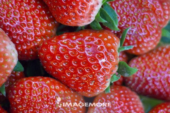 草莓,水果,上海,中国,亚洲,