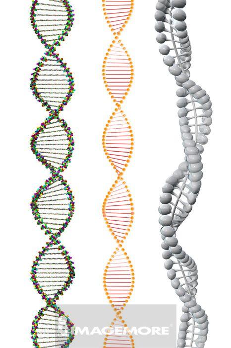 DNA,螺旋模型,