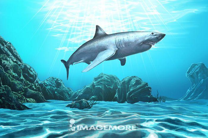 鲨鱼,动物,