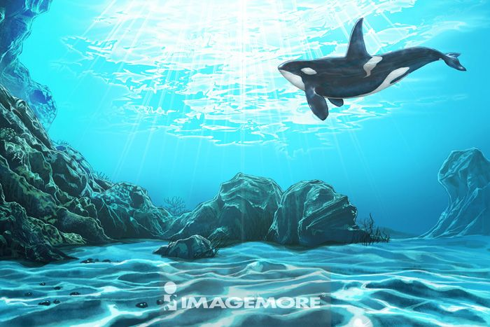鲸鱼,杀人鲸,动物,