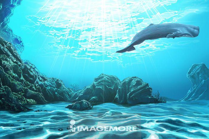 鲸鱼,抹香鲸,动物,
