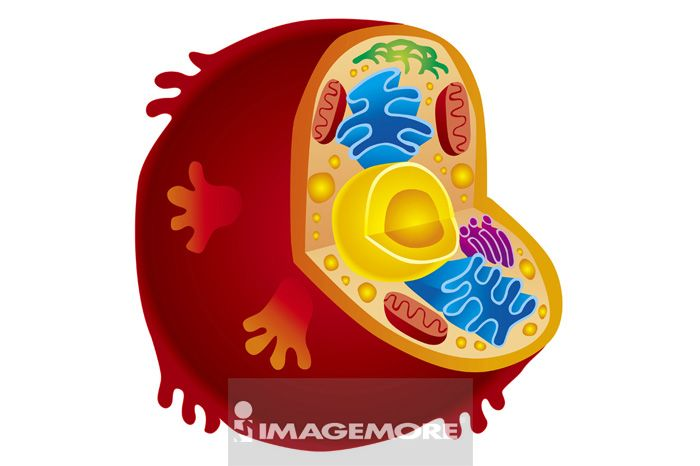插画,细胞,
