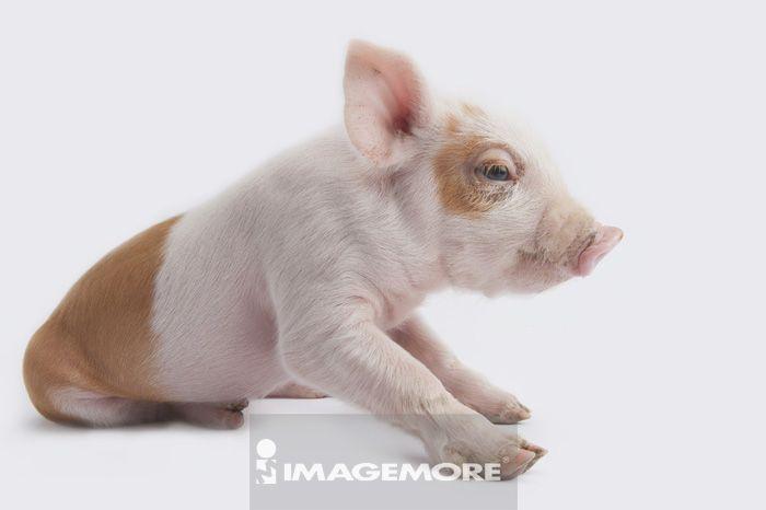 动物水印图片素材