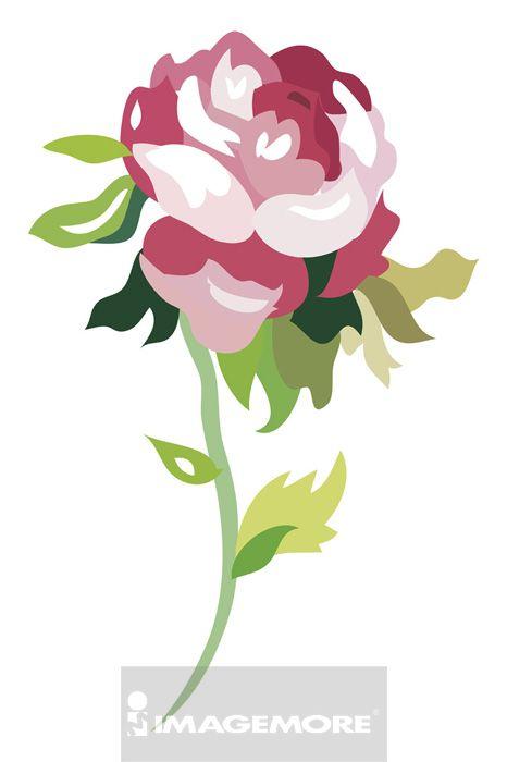 玫瑰,花,