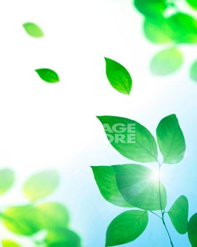 背景 壁纸 绿色 绿叶 设计 矢量 矢量图 树叶 素材 植物 桌面 400_500