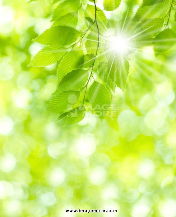 背景 壁纸 绿色 绿叶 树叶 植物 桌面 566_700 竖版 竖屏 手机