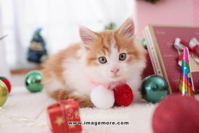 Kitten,