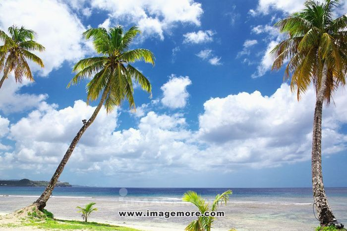 Palm trees and sky,