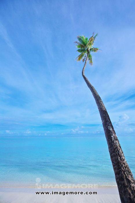 Palm tree and sky,