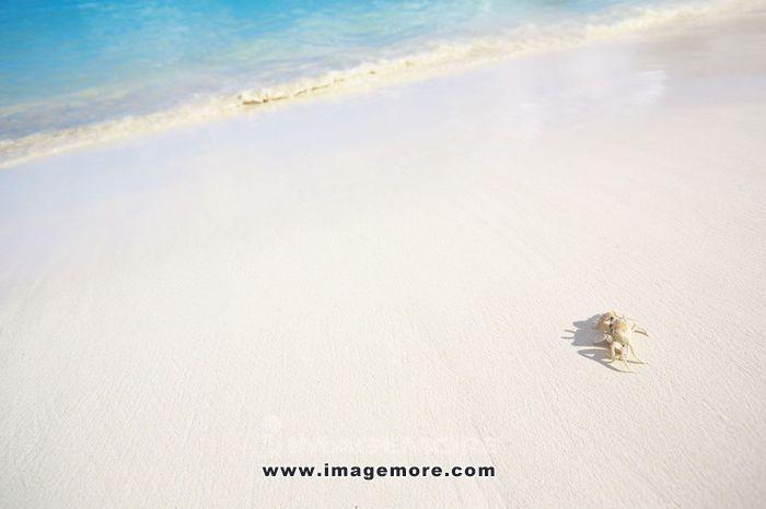 White sand beach,