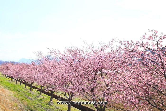 Shizuoka Prefecture, Japan,