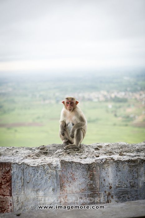 Monkey crouching on dilapidated rock wall