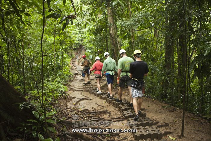People hiking through rain forest