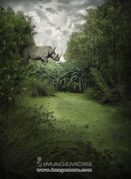 犀牛,有规模的,树,直图,步行,野生动物,生物,设计,电脑绘图,森林,测量
