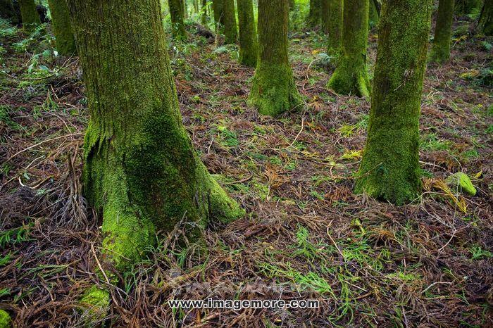 阿里山,台湾,森林公园,