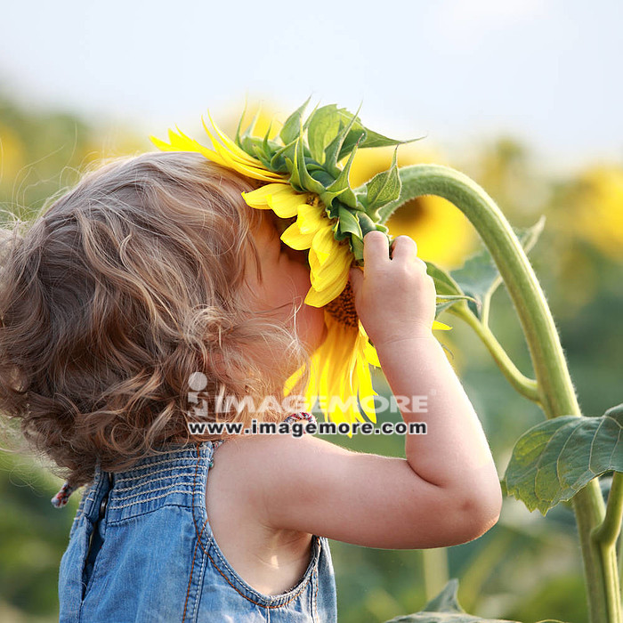 Cute child with sunflower in summer field,