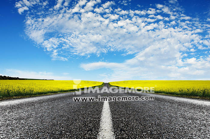Road travelling through a Canola Field,