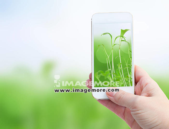 Woman hand taking picture with  smart phone against spring green background,