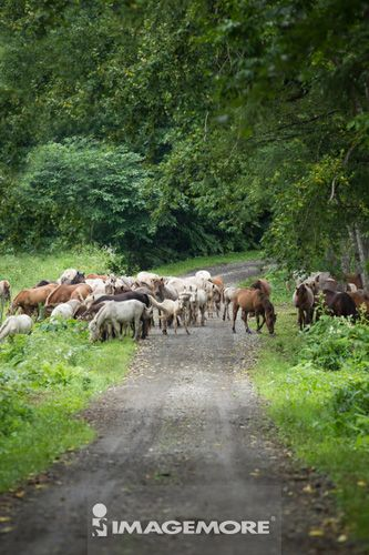 Herd of Horse,