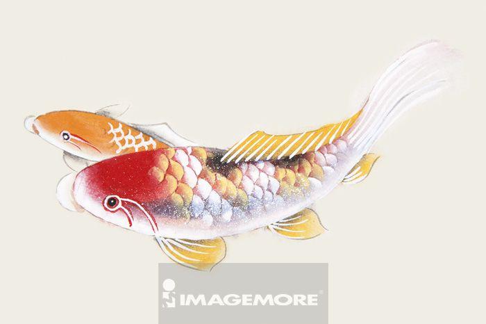 国画,锦鲤,鱼类,