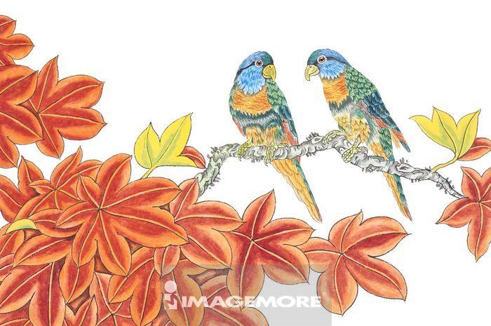 国画,花鸟画,花,鸟,