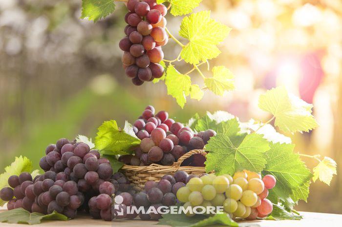 ,葡萄,葡萄园,亚洲,台湾,彰化,