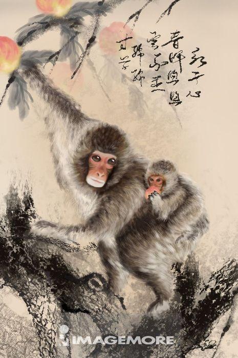 imb00170,imb00170001,猴子,生肖,猴年,可爱