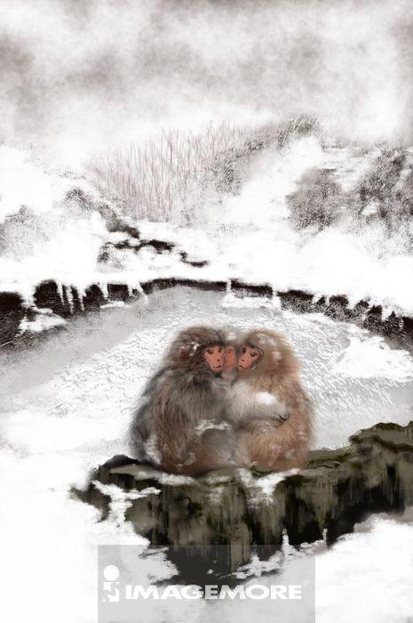 ,猴年,猴子,温泉猴,