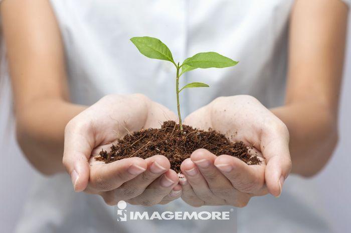 幼苗,植物,肉桂苗,
