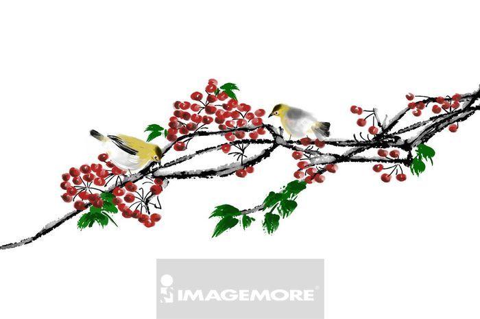 果实,浆果,二只动物,动物,自然,动物主题,动物图案,可爱,美丽,美丽的