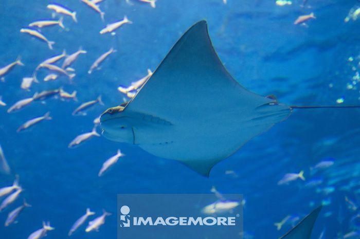 海底,海底动物,生物,生物学,海洋,水纹,水,美丽的,美丽,一群动物,满版