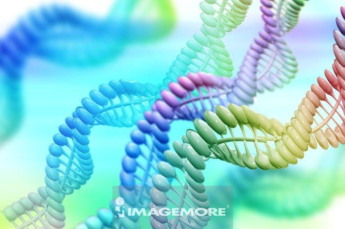 ,医疗和医学,DNA,染色体,