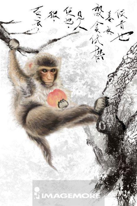素描动物画猴子步骤