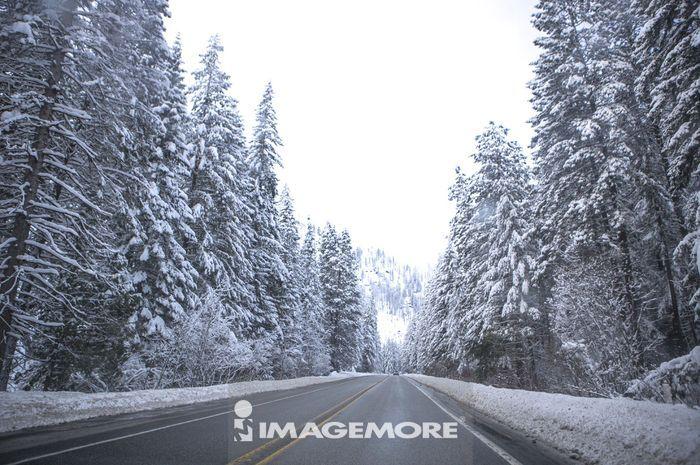 道路,西雅图,华盛顿州,美国,北美洲,