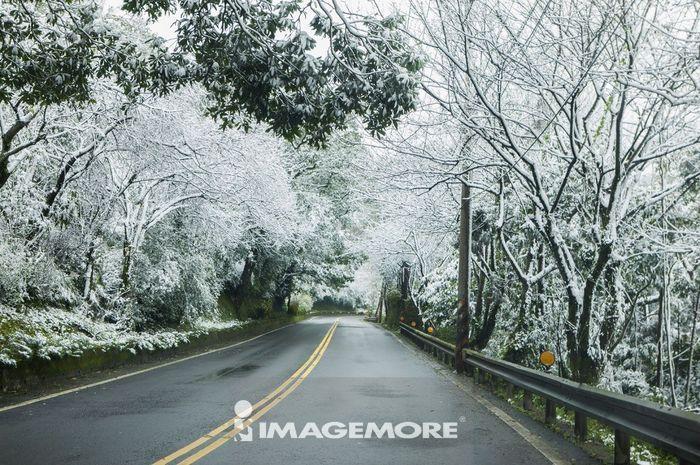 道路,雪,冬天,