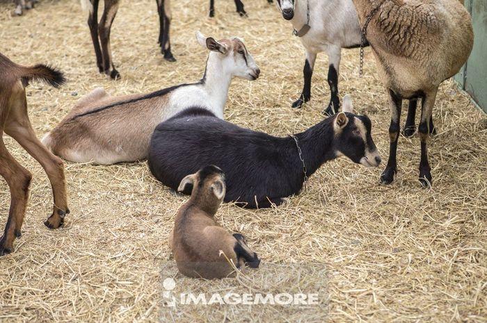 动物主题,干草,畜牧业