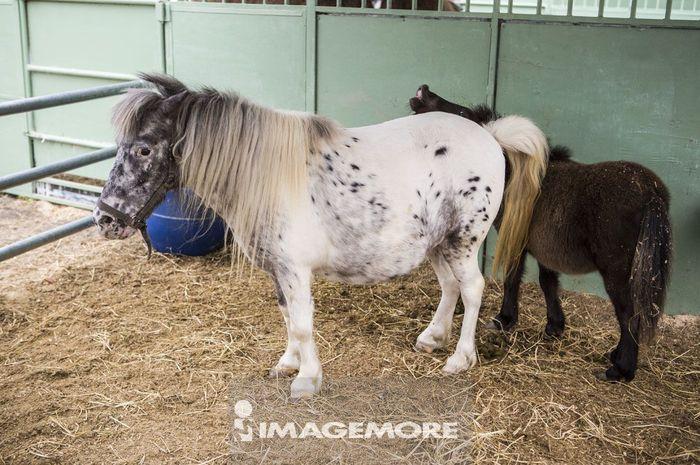 动物图片可爱马