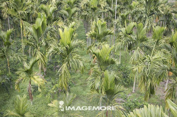 树丛鸟瞰图素材
