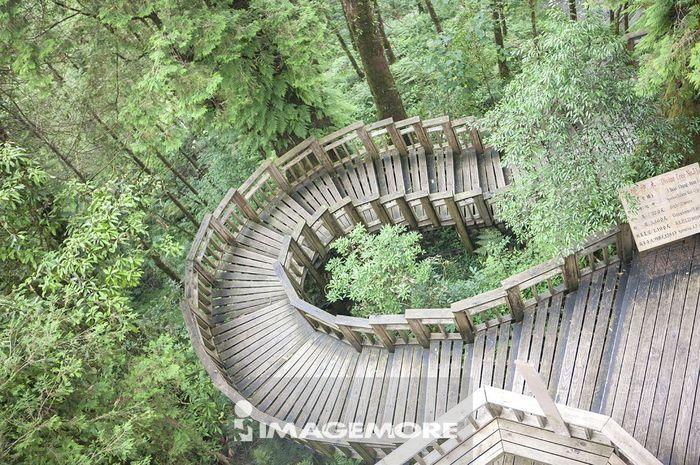 台湾,宜兰,亚洲,栖兰,马告桧木公园,
