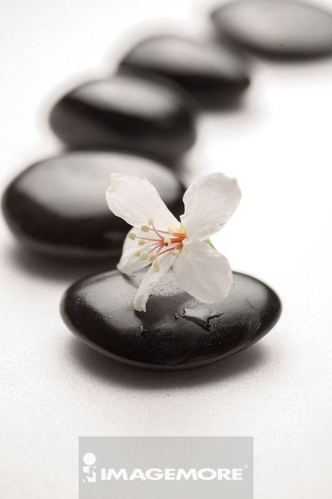 油桐花,花,能量石,