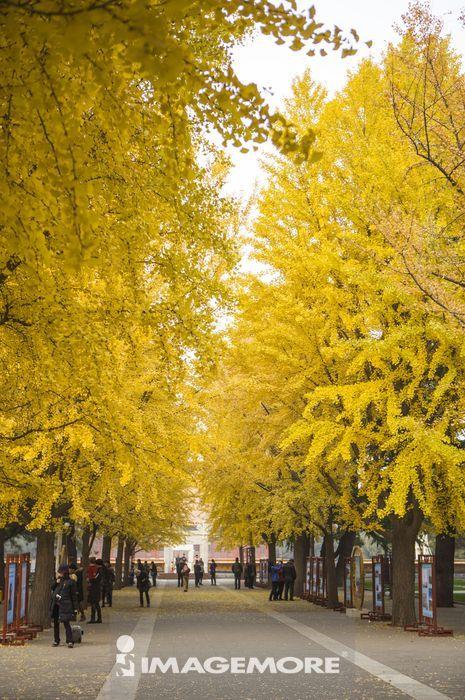 中山公园,北京,中国,