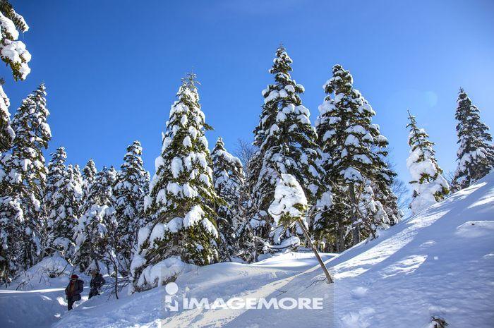 雪景,雪,树,