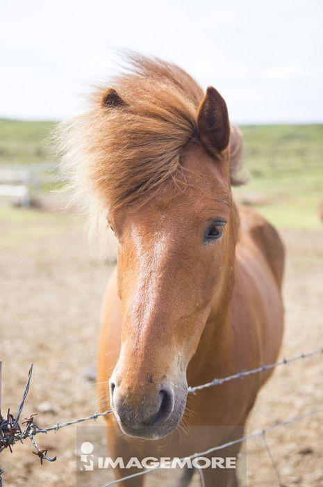 马,动物,