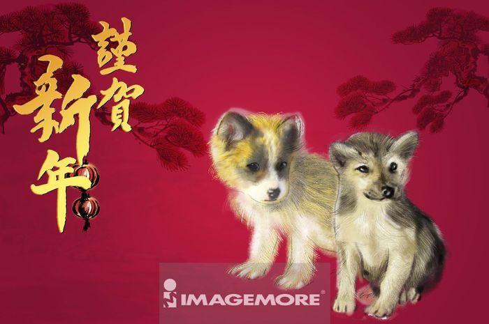 狗年,新年,春节,格陵兰哈士奇,
